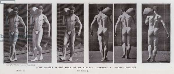 The Human Figure in Motion: Some phases in the walk of an athlete, carrying a 75-pound boulder (b/w photo)