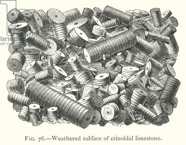 Weathered surface of crinoidal limestone (engraving)