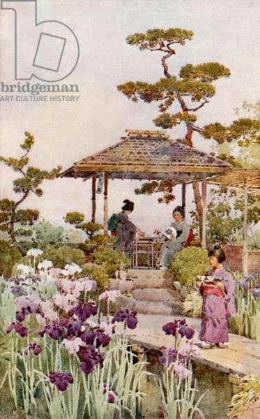 An Iris Garden (colour litho)