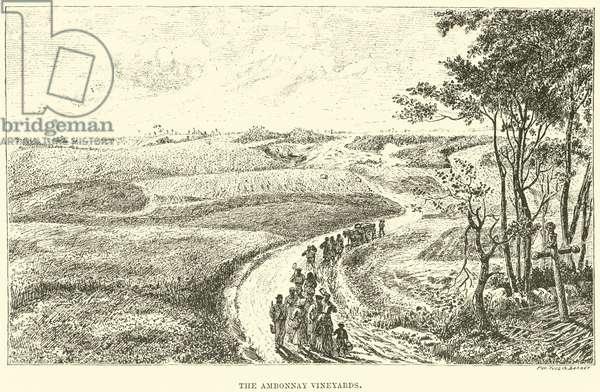 The Ambonnay Vineyards (engraving)
