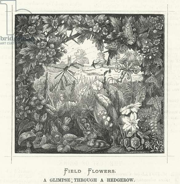Field Flowers, a Glimpse through a Hedgerow (engraving)