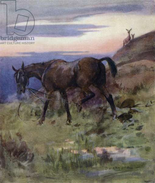 Illustration for The Story of a Red Deer (colour litho)