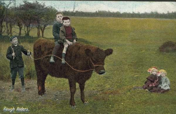 Rough riders: children riding a cow (colour photo)