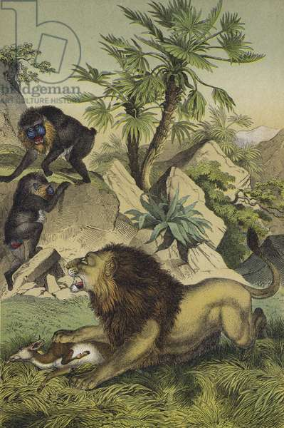 Animals and plants of the mountain forests of coastal West Africa (colour litho)