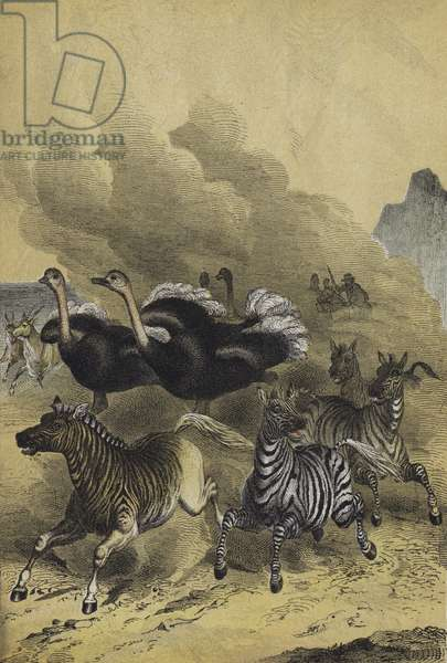 Animals of Southern Africa (colour litho)