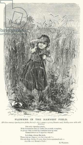 Flowers in the Harvest Field (engraving)