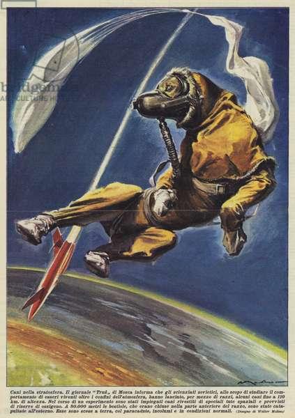 Cani nella stratosfera (colour litho)