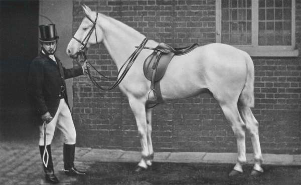 King Edward as Horseman (b/w photo)
