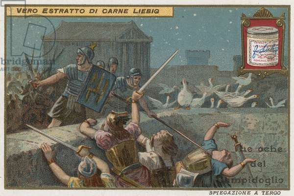 Geese of the Capitoline hill