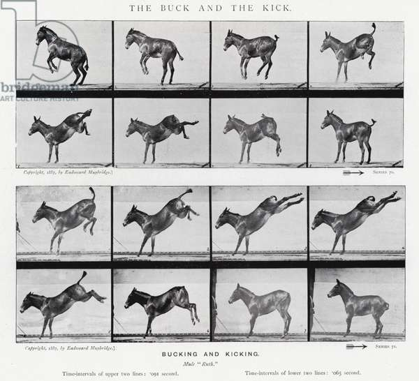 Eadweard Muybridge: The Buck and the Kick (b/w photo)