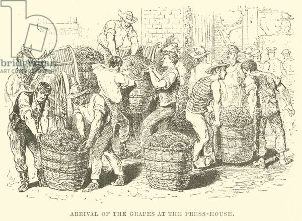 Arrival of the Grapes at the Press-House (engraving)