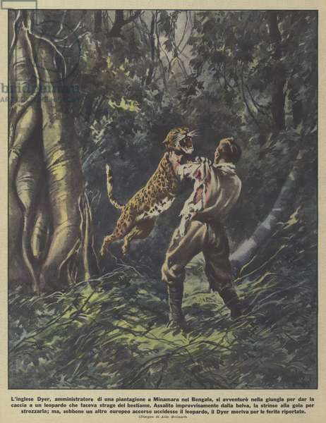 Death of a British plantation manager in Bengal while hunting a leopard that had been killing cattle (colour litho)