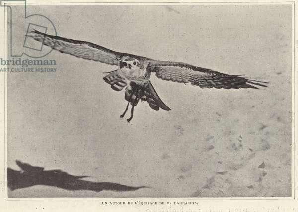 One of the birds of M Barrachin (b/w photo)