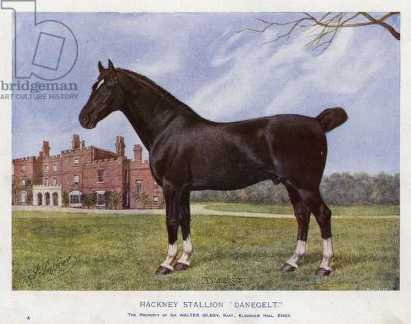 """Hackney Stallion """"Danegelt"""" (colour litho)"""