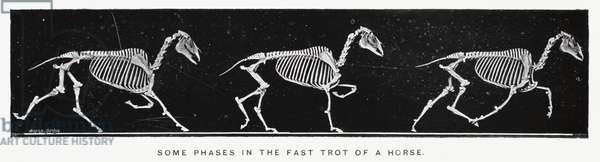 Eadweard Muybridge: Some phases in the fast trot of a horse (b/w photo)