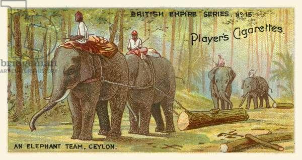 An Elephant Team, Ceylon (chromolitho)
