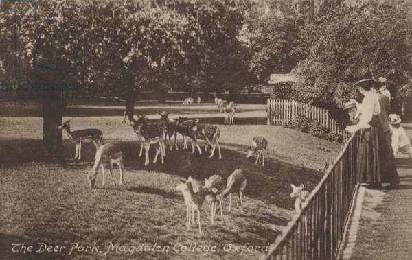 The Deer Park, Magdalen College, Oxford (b/w photo)