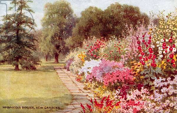 Herbaceous Border, Kew Gardens (colour litho)