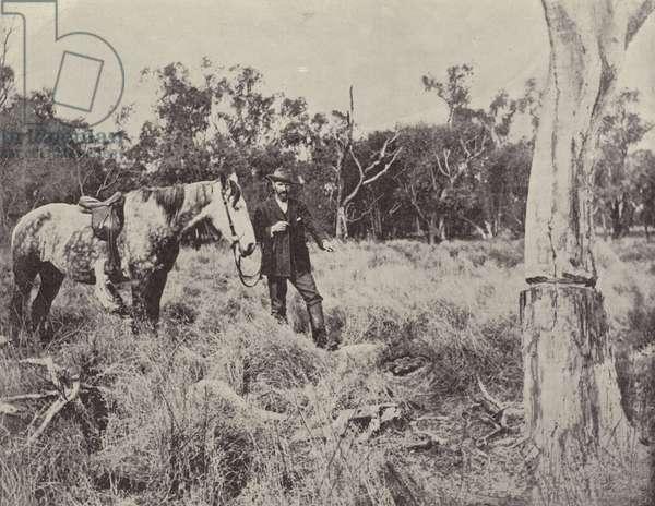 Finding an Emu's Nest (b/w photo)
