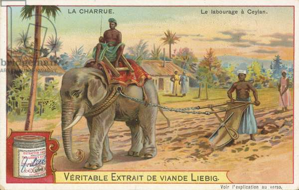 Ploughing by elephant, Ceylon
