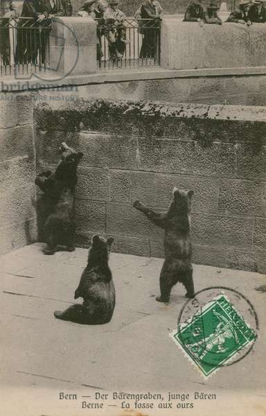The bear pit with young bears at the zoo in Bern. Postcard sent in 1913.
