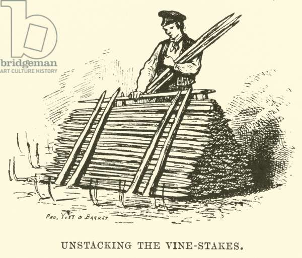 Unstacking the Vine-Stakes (engraving)