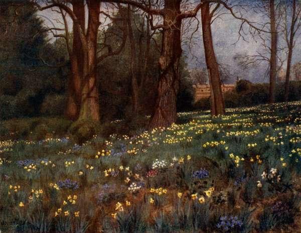 Kew Gardens: The Wild Garden in Spring (colour litho)