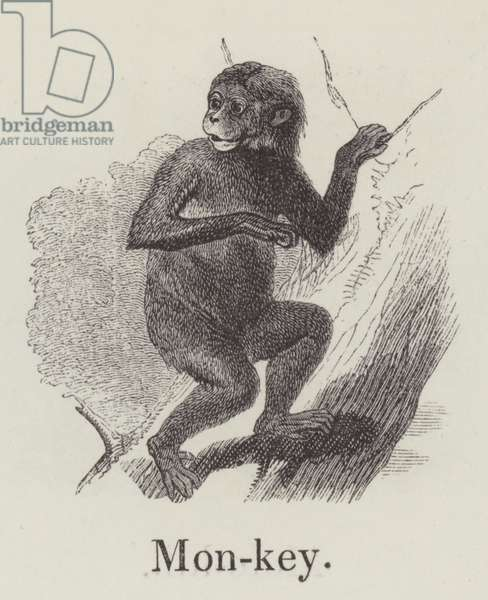 Monkey (engraving)