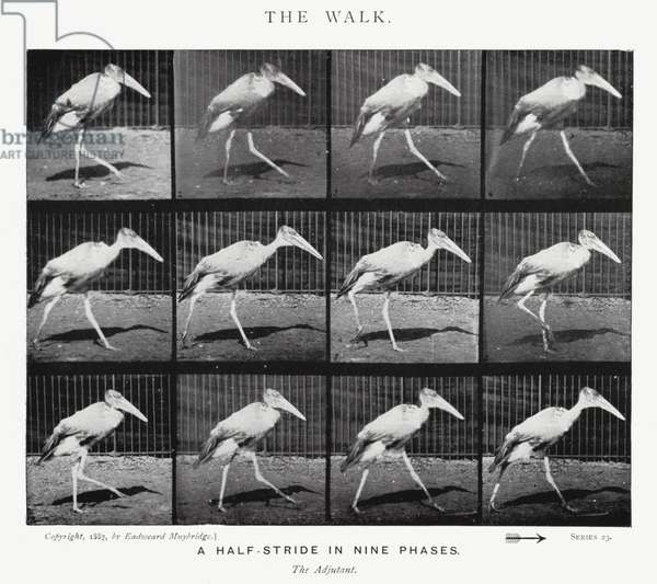 Eadweard Muybridge: The Walk (b/w photo)