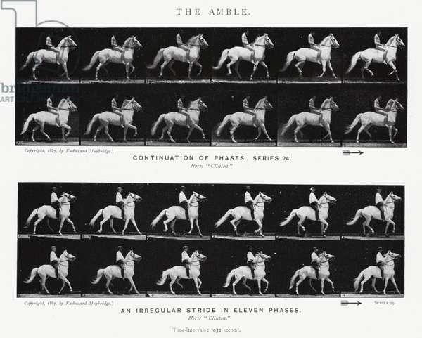 Eadweard Muybridge: The Amble (b/w photo)