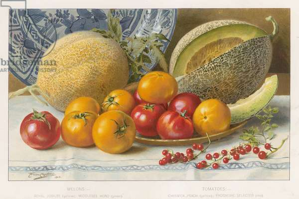 Melons and tomatoes (colour litho)