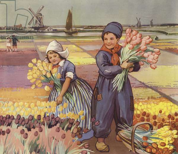 Children picking tulips in Holland (colour litho)