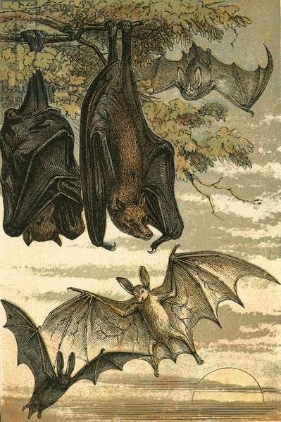 Flying Fox, Vampire Bat, Common Bat and Spectre Vampire