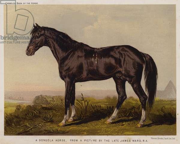 A Dongola Horse (colour litho)