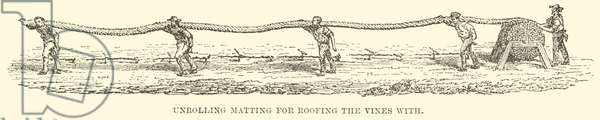 Unrolling Matting for Roofing the Vines with (engraving)