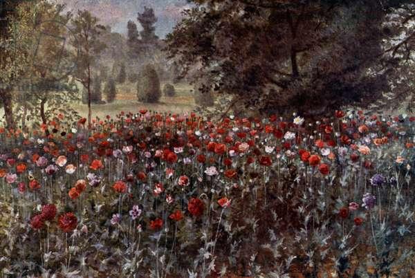 Kew Gardens: The Poppy Beds (colour litho)
