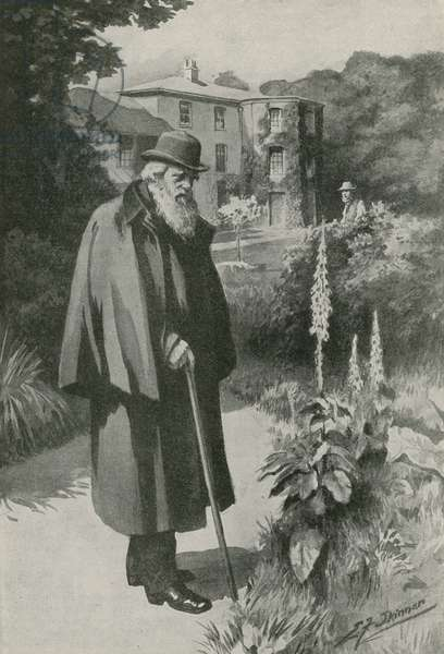 Charles Darwin in his garden at Down House (litho)