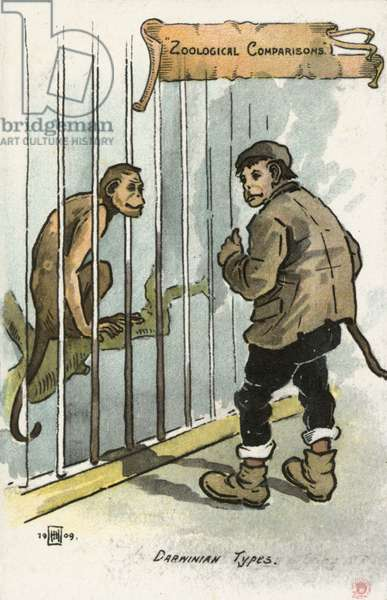 Evolution: man and ape comparing each other up at a zoo (colour litho)
