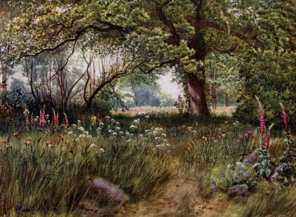 Kew Gardens: In Queen's Cottage Gardens (colour litho)