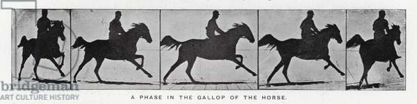 Eadweard Muybridge: A phase in the gallop of the horse (b/w photo)