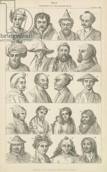 Man. Varieties of the human race (engraving)