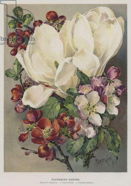 Flowering Shrubs (chromolitho)