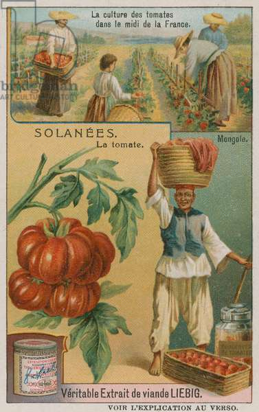 Tomato - trade card from the Liebig Company, (colour litho)