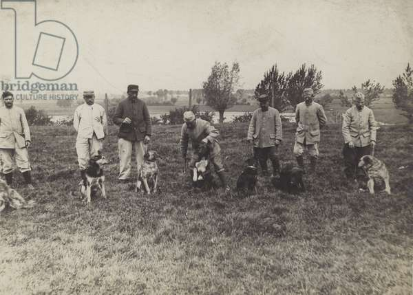 Dogs being exercised/trained by French soldiers (b/w photo)