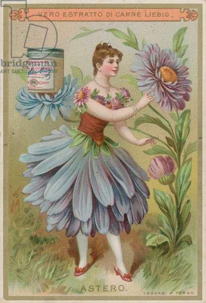 Aster Flower Girl (chromolitho)