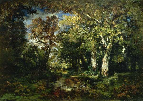The Forest at Fontainebleau, 1870 (oil on canvas)