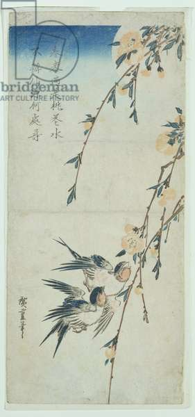 Swallows and Peach Blossom in Moonlight (woodblock print)