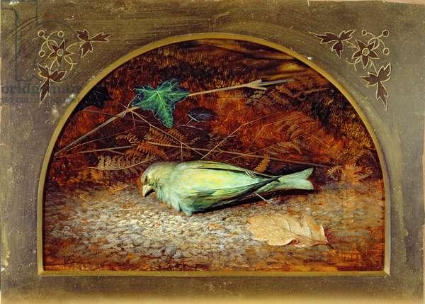 A Dead Linnet, 1862 (oil on board)