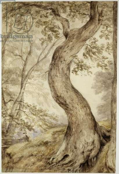 Tree at Helmingham, c.1800 (w/c on paper)