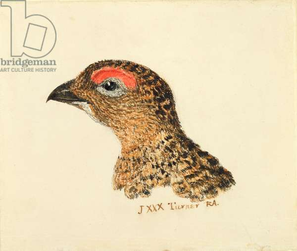 Head of Grouse, from The Farnley Book of Birds, c.1816 (pencil and w/c on paper)